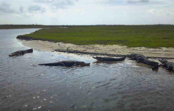 Gator Beach